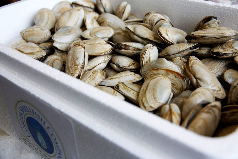 New England Steamer Clams - Carolina Fish Market