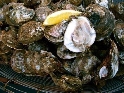 Gulf Oysters Charlotte NC