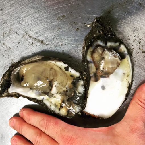 Stump Sound Oysters