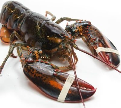 Live Lobster from the Carolina Meat & Fish Co