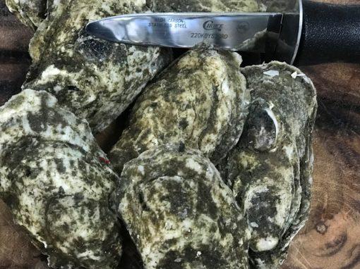 Wellfleet Oysters Charlotte NC