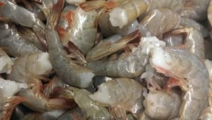 Fresh NC Shrimp
