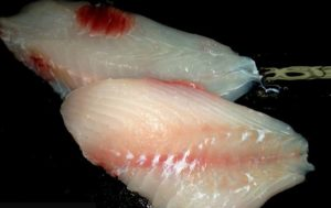 NC Triggerfish