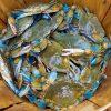 Blue crab Charlotte NC