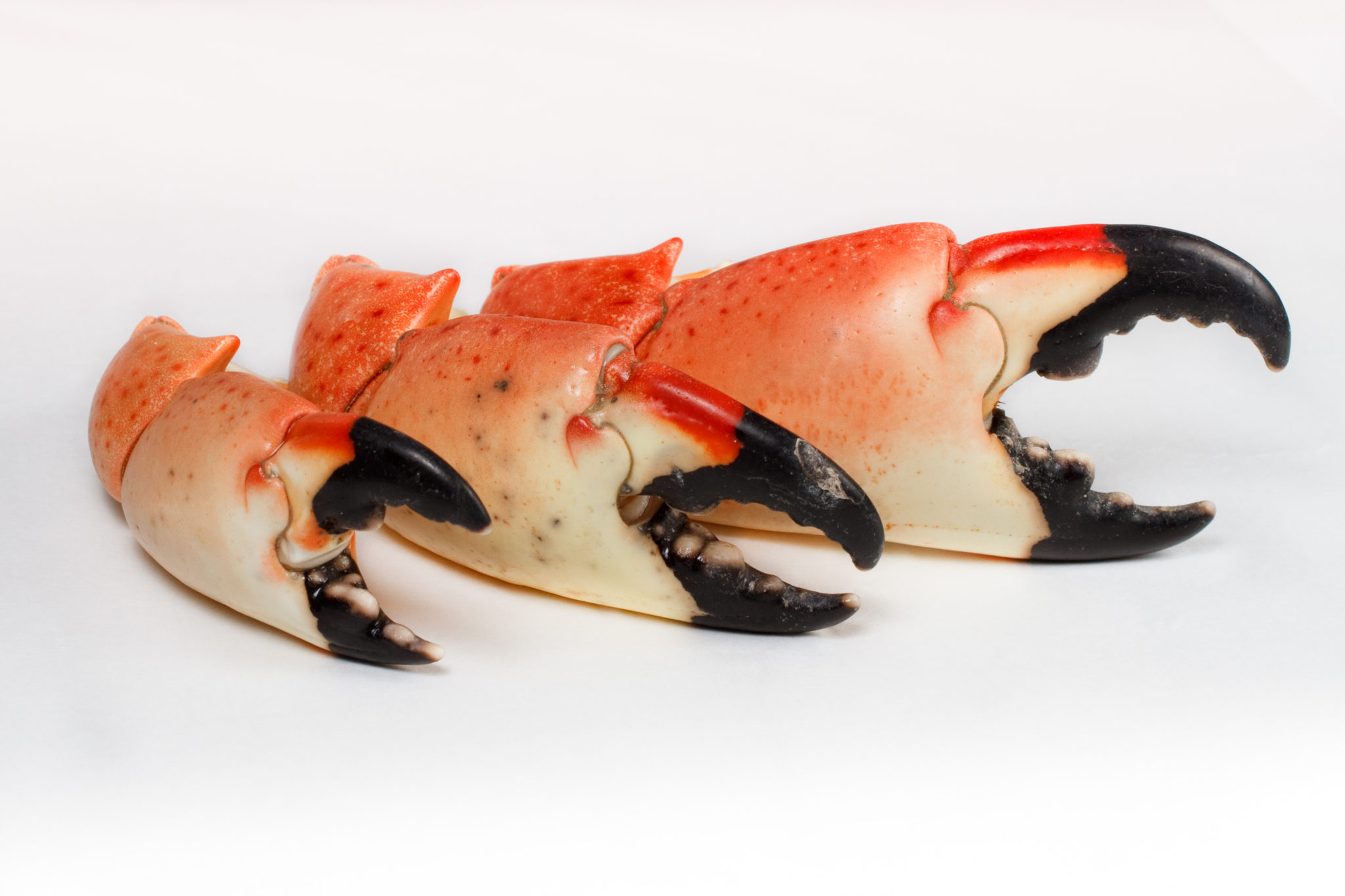 Florida Stone Crab Claws - Colossal - Carolina Meat & Fish Co.