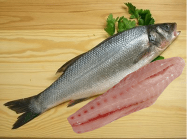 California White Sea Bass