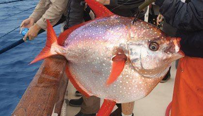 Opah or Moonfish