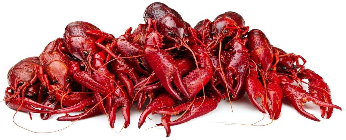 louisiana crawfish 5 lbs carolina meat fish co
