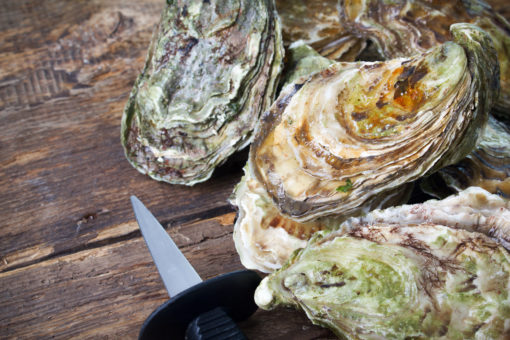 James River Oysters Charlotte NC