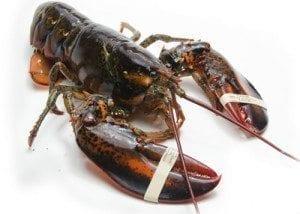 Lobster Charlotte, NC