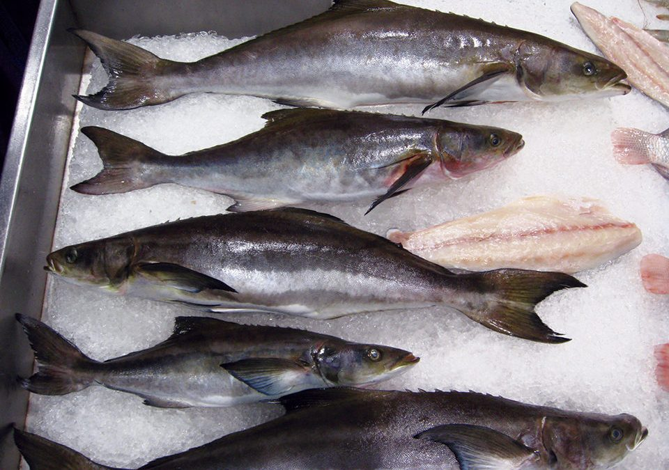 Fresh Cobia Recipe